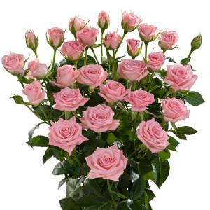odilia_roses