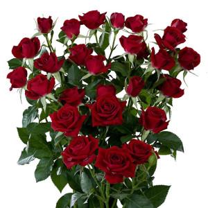 rubicon_roses